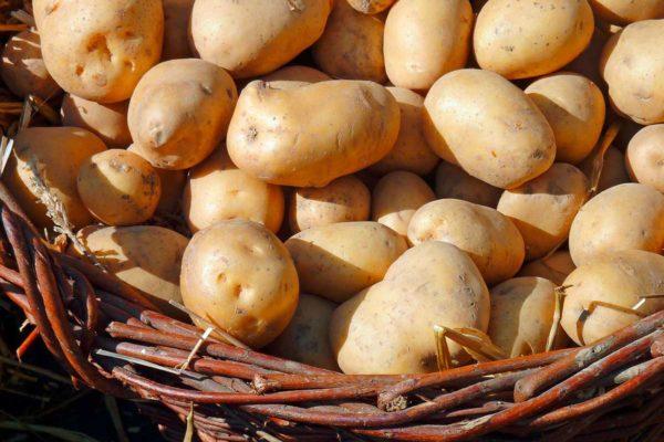 Kartoffel Verkauf in Molzbichl